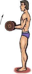 leo robert biceps curl