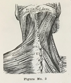 neck anatomy chart