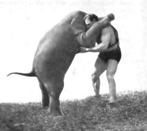Hermann Goerner wrestling elephant